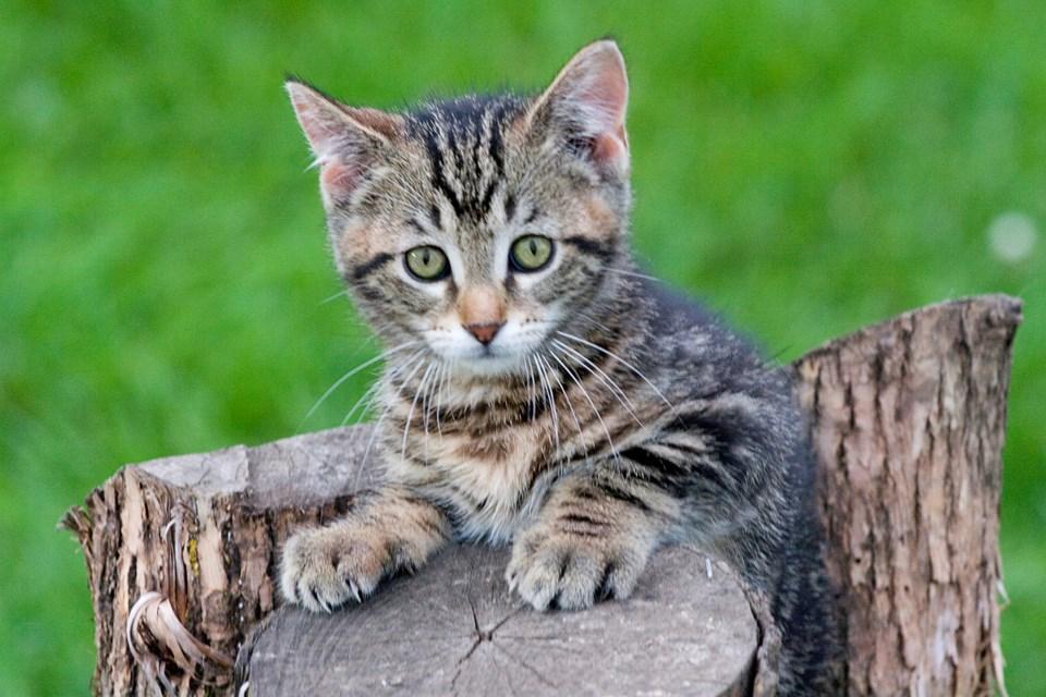 WEB Penhold cat problem