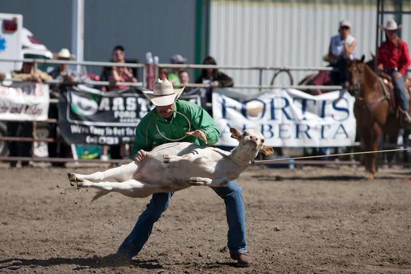 Lindsay Taylor of Parkland manoeuvres his calf during the calf roping event at the Didsbury Rodeo.