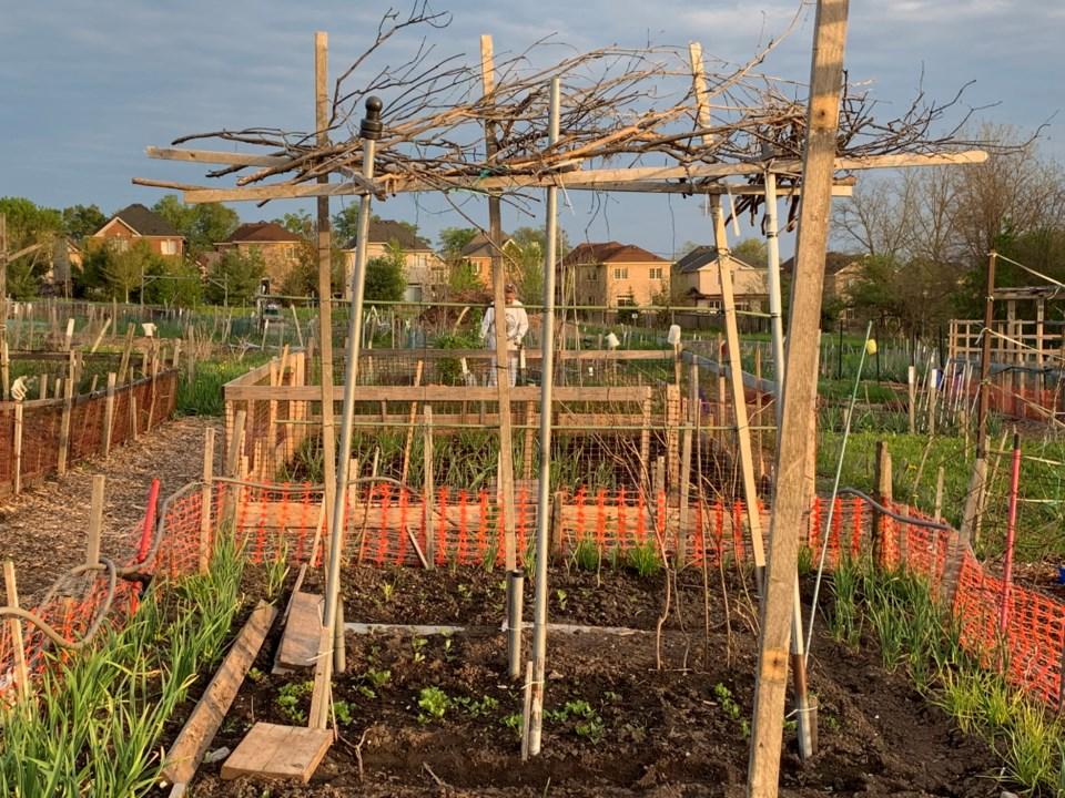 2019 06 16 community garden