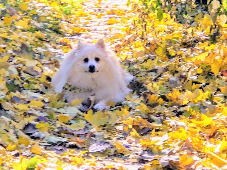 20190507 rescue dog Cody