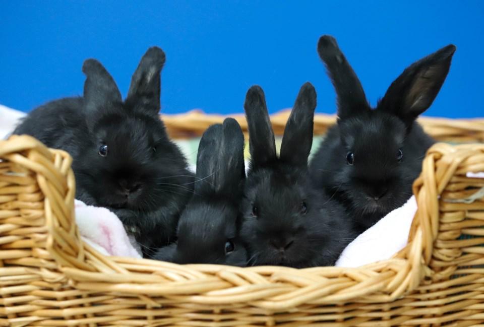 20190707 baby bunnies
