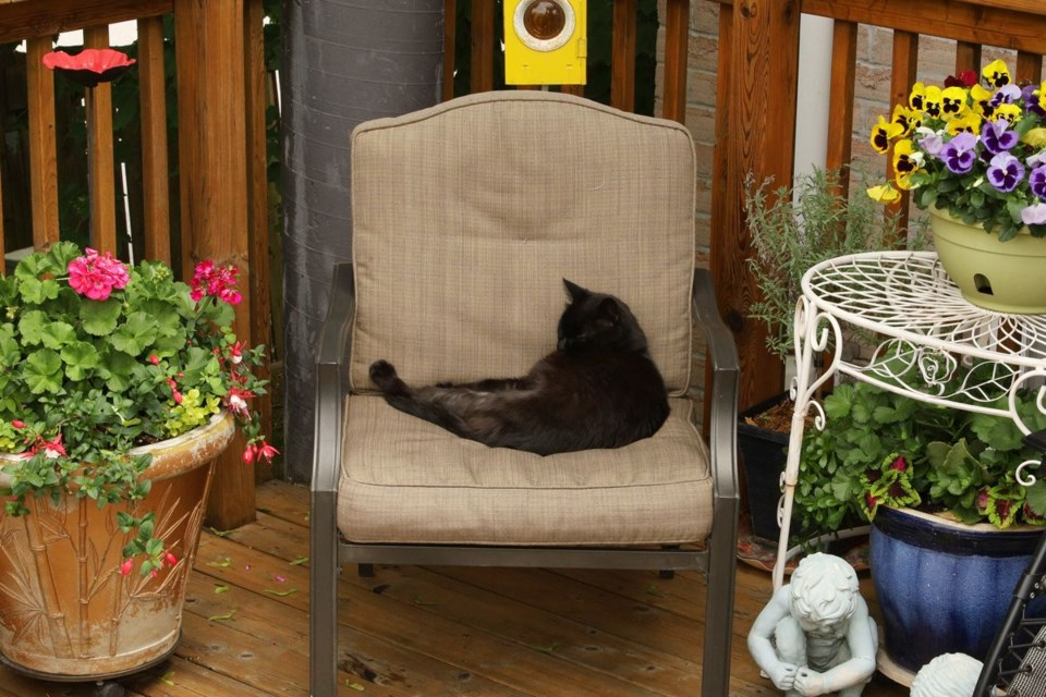 2021 06 11 Summertime Charlie cat on a chair GK
