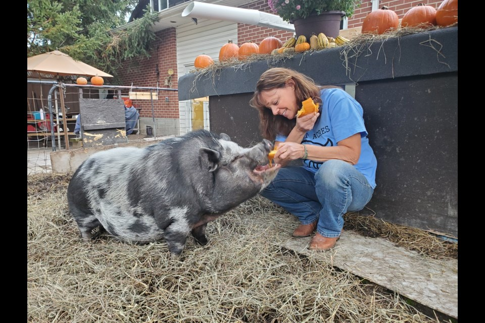 Kirsten Duggan with Wellington, one of 11 pigs she has rescued from abandonment and abuse.