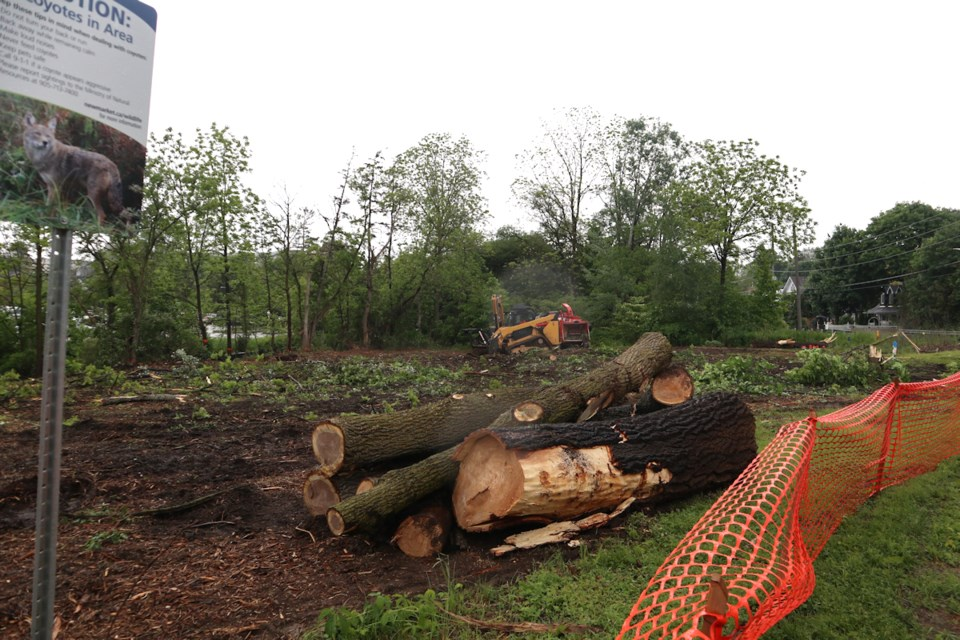 20190614 trees down wide view