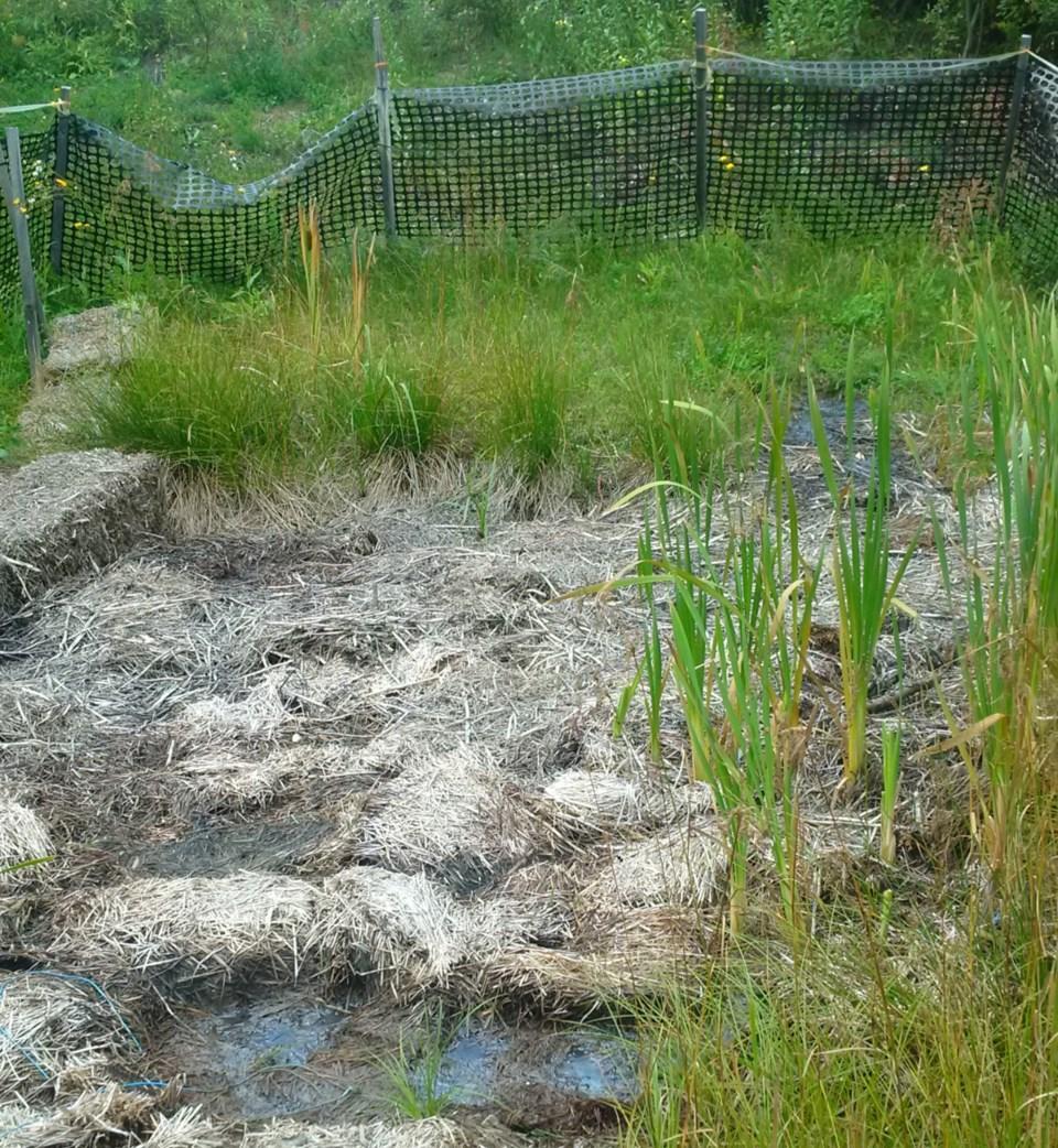 Domtar Chapleau vegetation