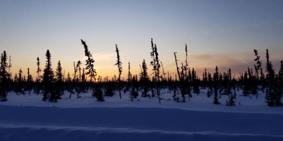 Far North tree line (CELA.ca)