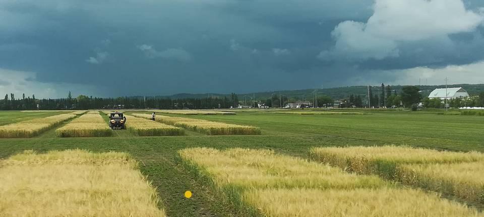 agriculture_nofia