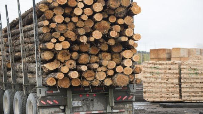 softwood-lumber