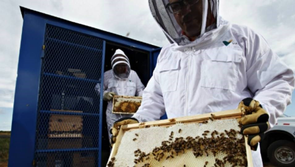 Vale established its apiary, situated on a former slag pile at its Copper Cliff property, in 2014.