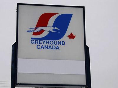 Greyhound_Cropped