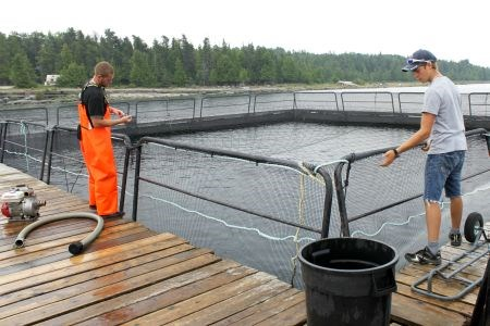 Manitoulin Aquaculture