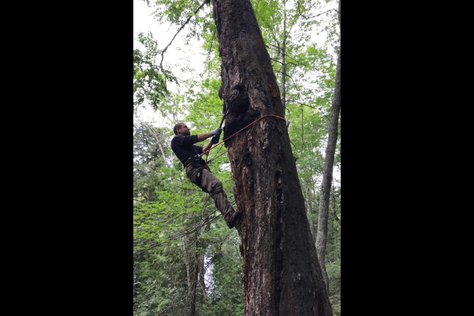 Cody McElrea, who incorporated TruNorth Chaga in 2017, harvests and processes wild-growing chaga mushrooms from birch trees in Algoma. His range of products is sold to health-food enthusiasts across North America. (Supplied photo)