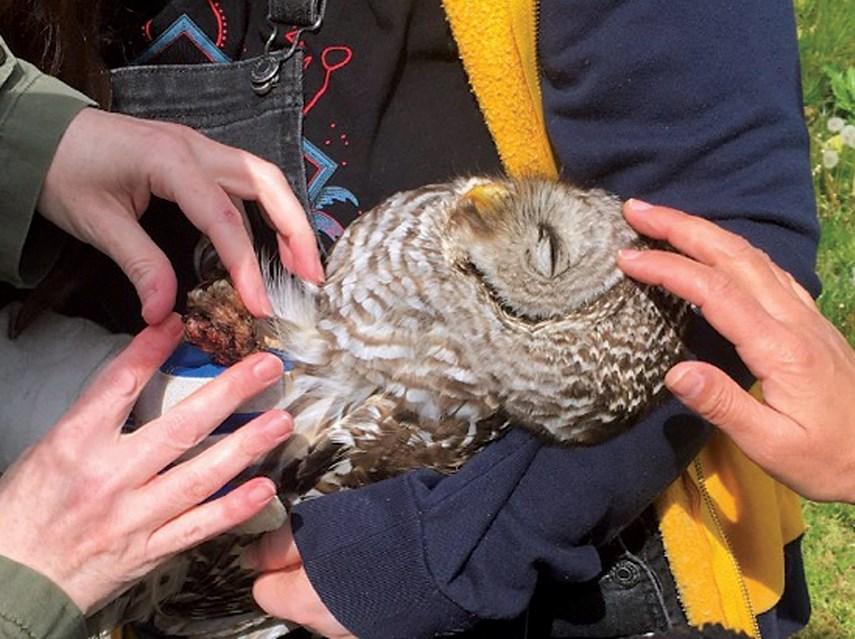 1580377-sick-owl-2-web