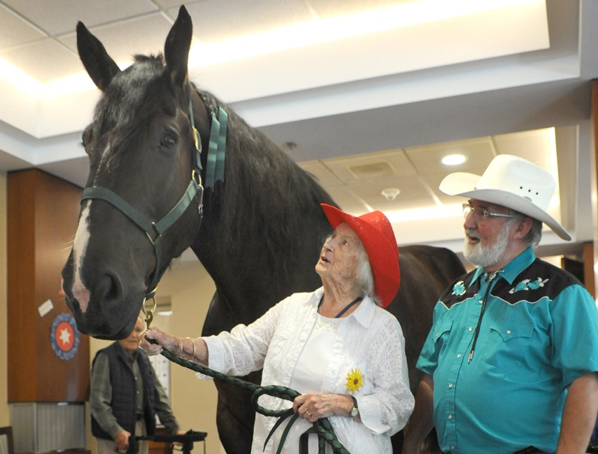 Horse at Hollburn Residences 02 MW