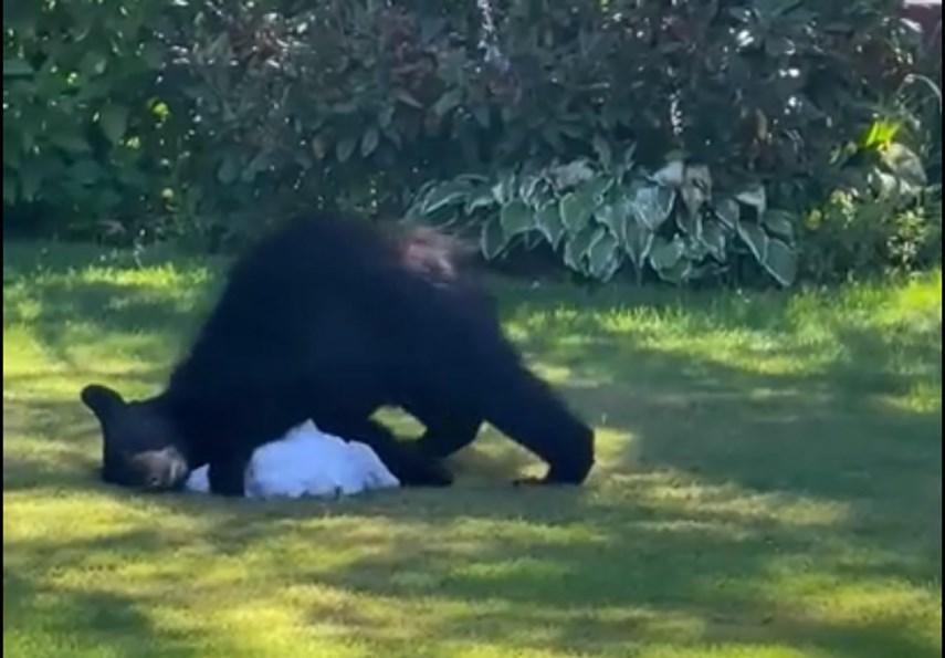 Laundry bear web