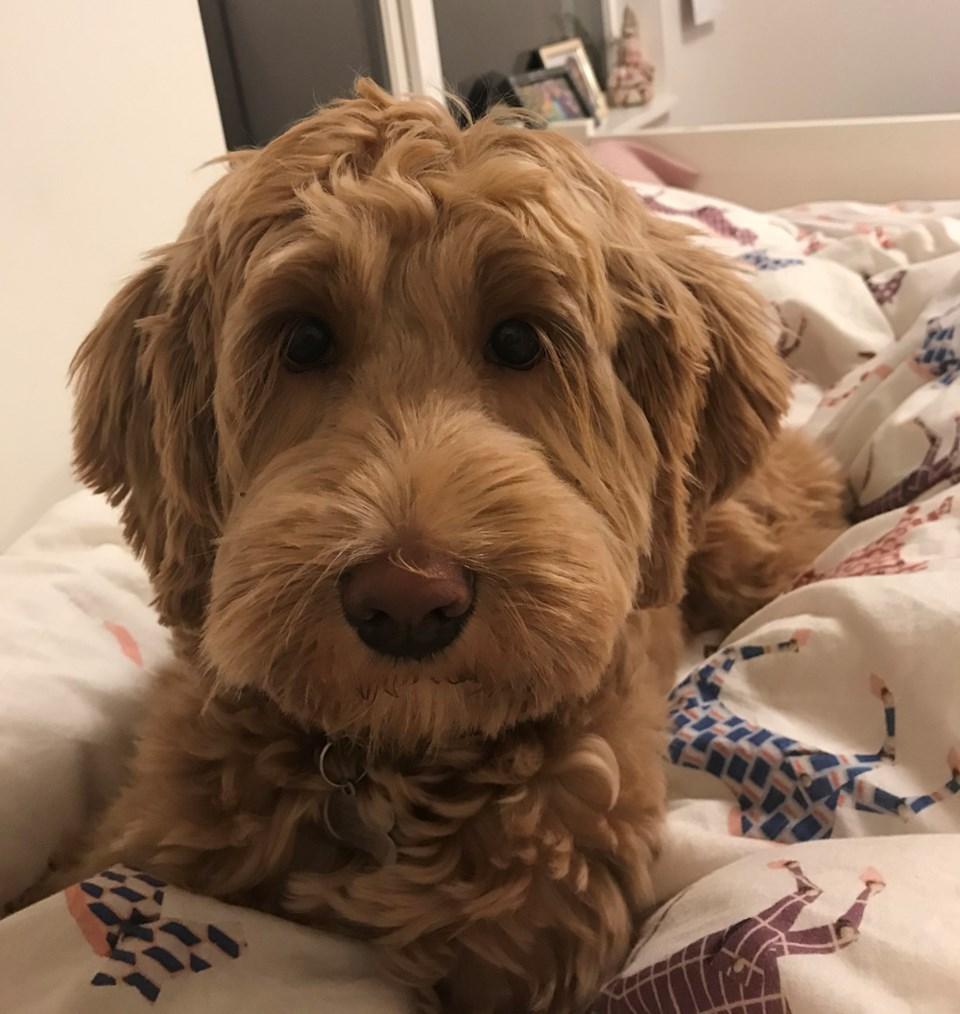 missing dog clover