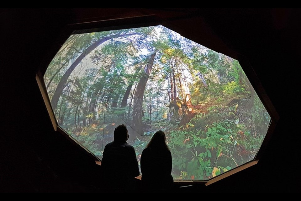 Inside a geodesic dome, built within CityScape Community ArtSpace in North Vancouver, viewers will be able to experience a 15-minute auditory mix of music and nature sounds, with a wraparound view of the ancient forest.