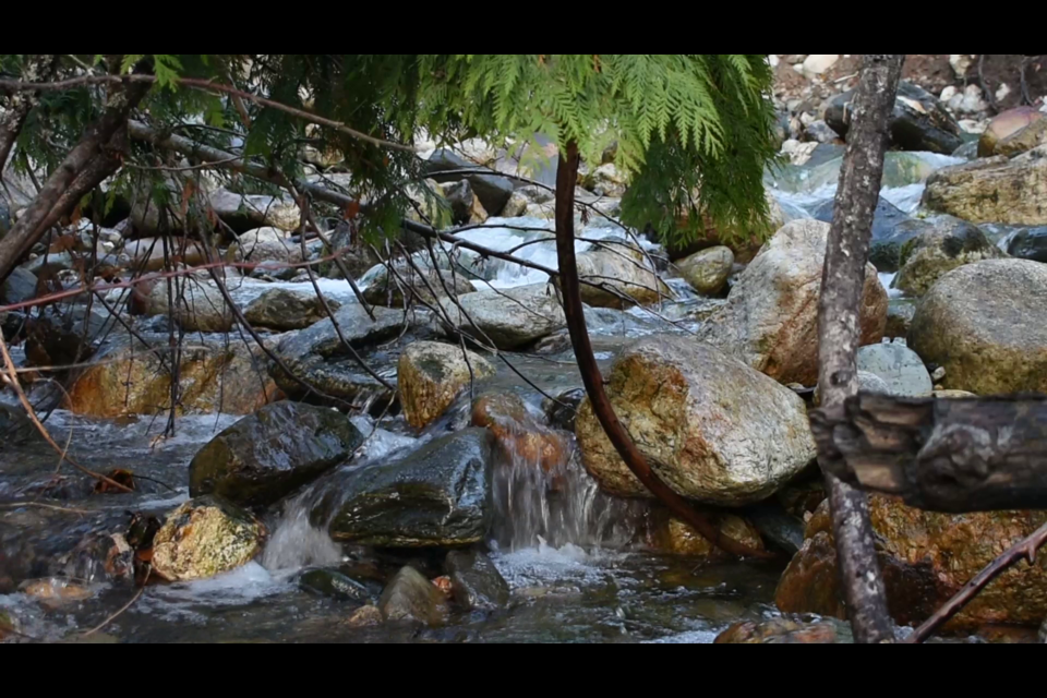 A still from Ash Simpson's video, Brash Allen, is featured in the Polygon Gallery presentation Response: Our Land Narrative.
