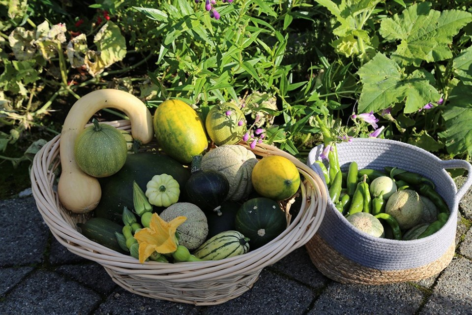Beyond bountiful: final harvest from a three-month-old edible ecosystem.