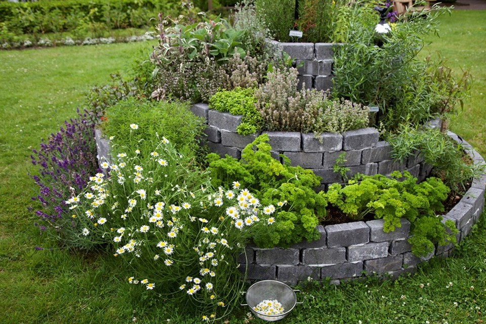 By midsummer, herb spirals are bursting at the seams with culinary and medicinal herbs.