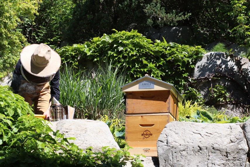 A beekeeper tends to Amica West Vancouver's new beehive, which was installed at the long-term care home and seniors residence at the end of May 2021.