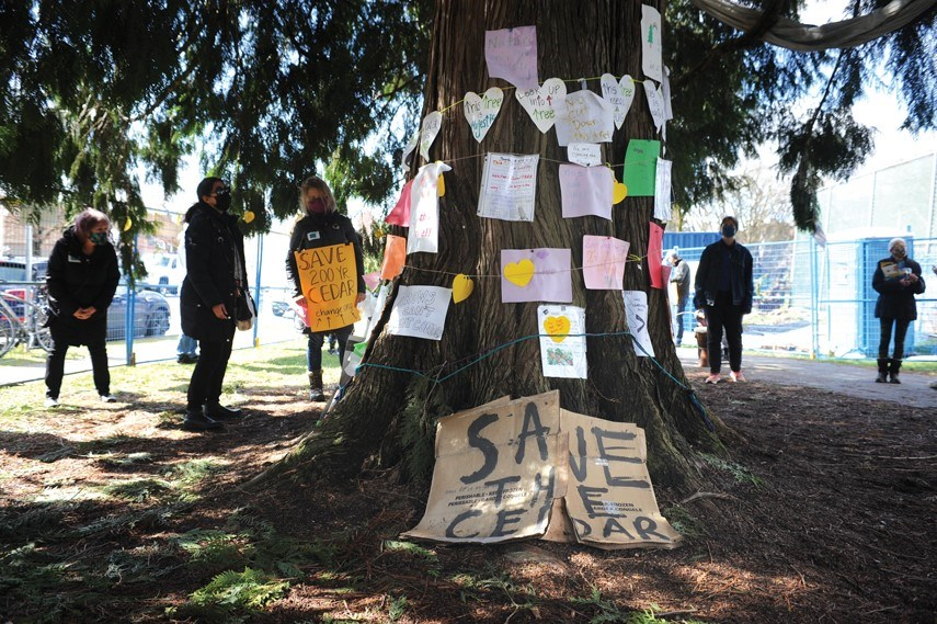 Cedar tree protest 01