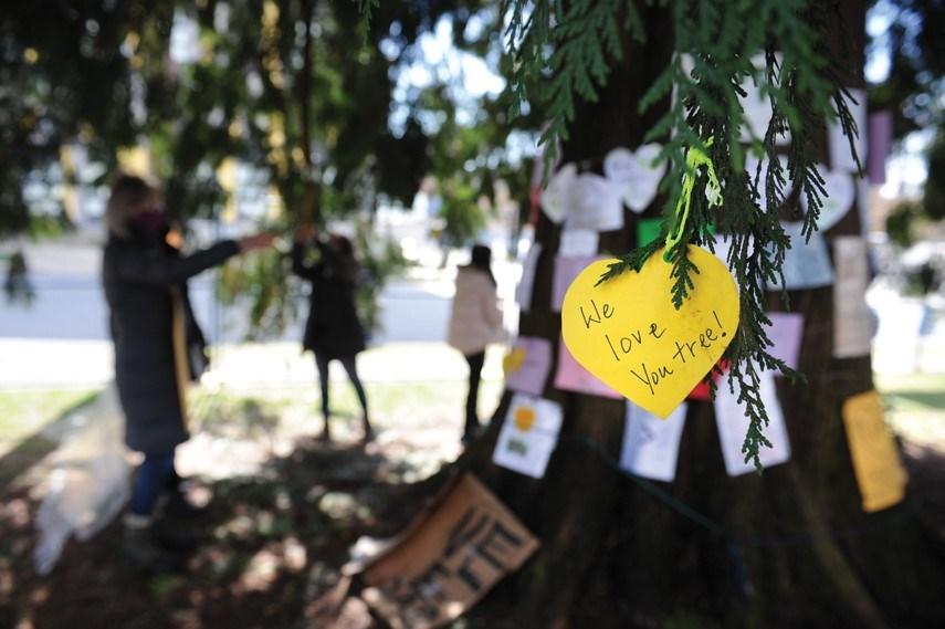 Cedar tree protest 03