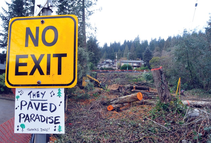 The District of North Vancouver has cut down 35 trees at the top of Naughton Avenue, to enable construction of a temporary traffic detour while the Gallant Avenue storm sewer replacement project takes place.