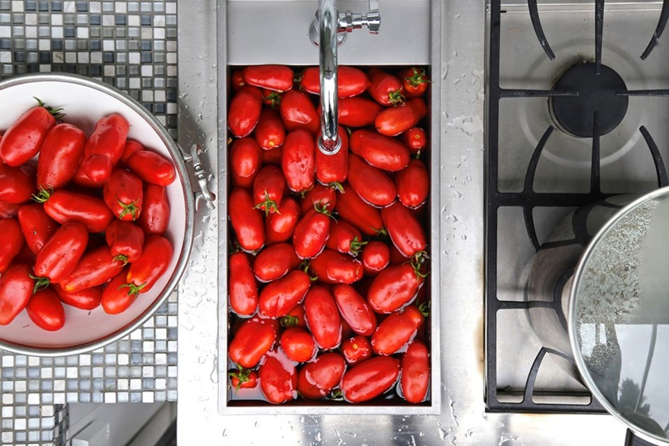 Voluptuous San Marzano tomatoes in a bath before peeling and canning.