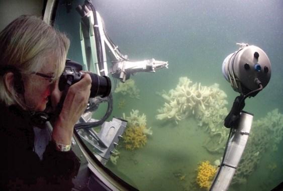 Glass sponge reefs