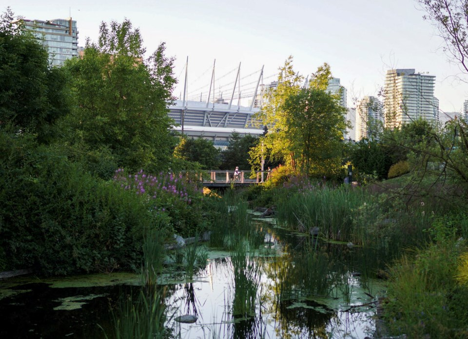 Hinge Park wetland