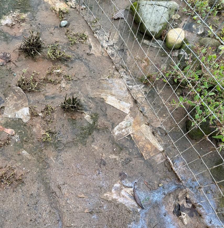 Mackay sewage web
