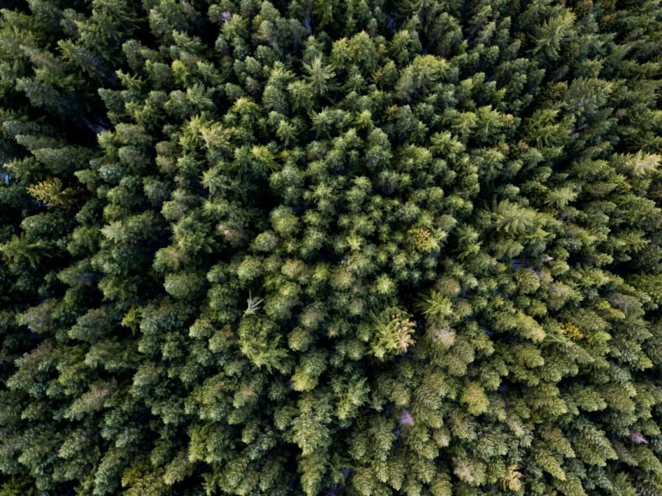 Squamish trees