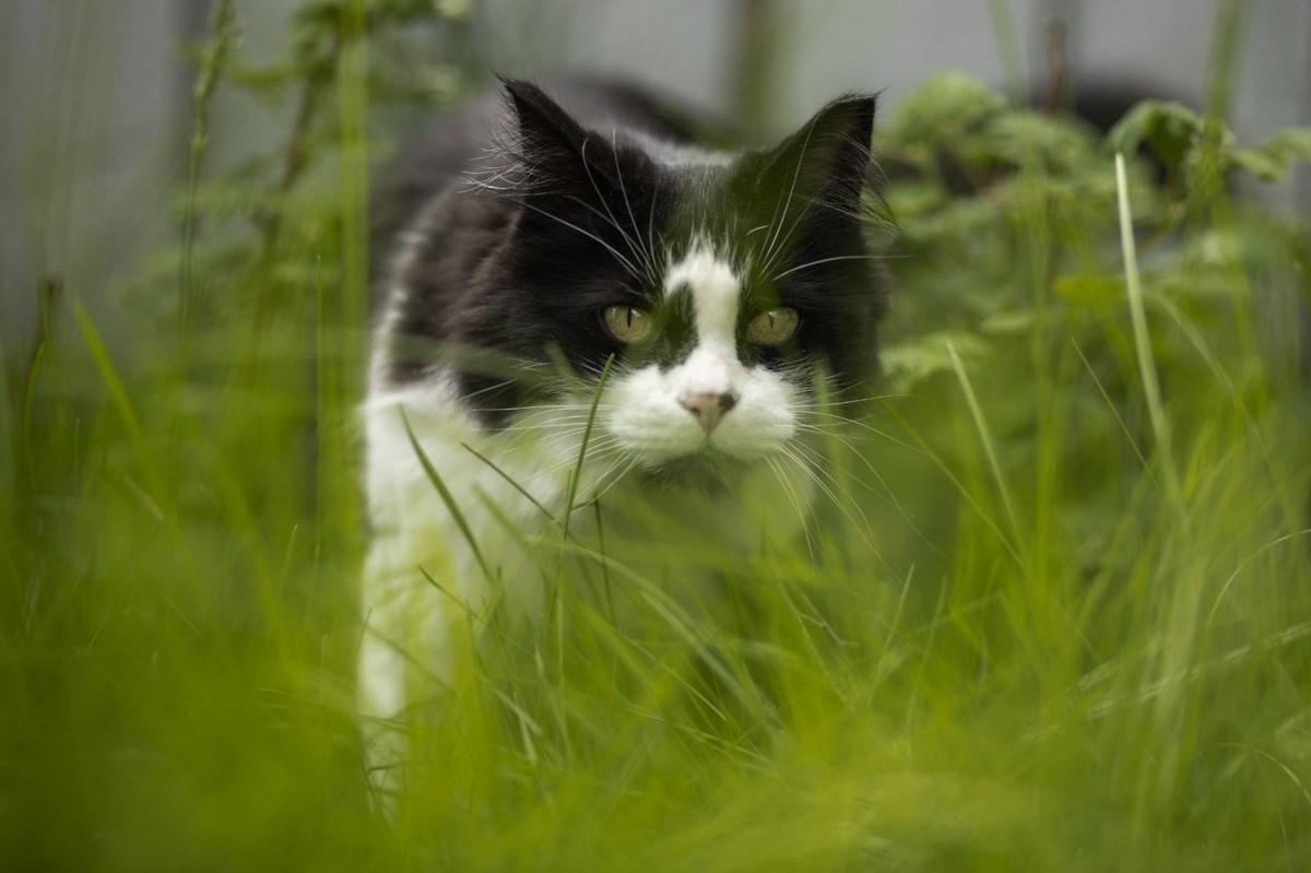 Okotoks putting cat bylaw on the backburner