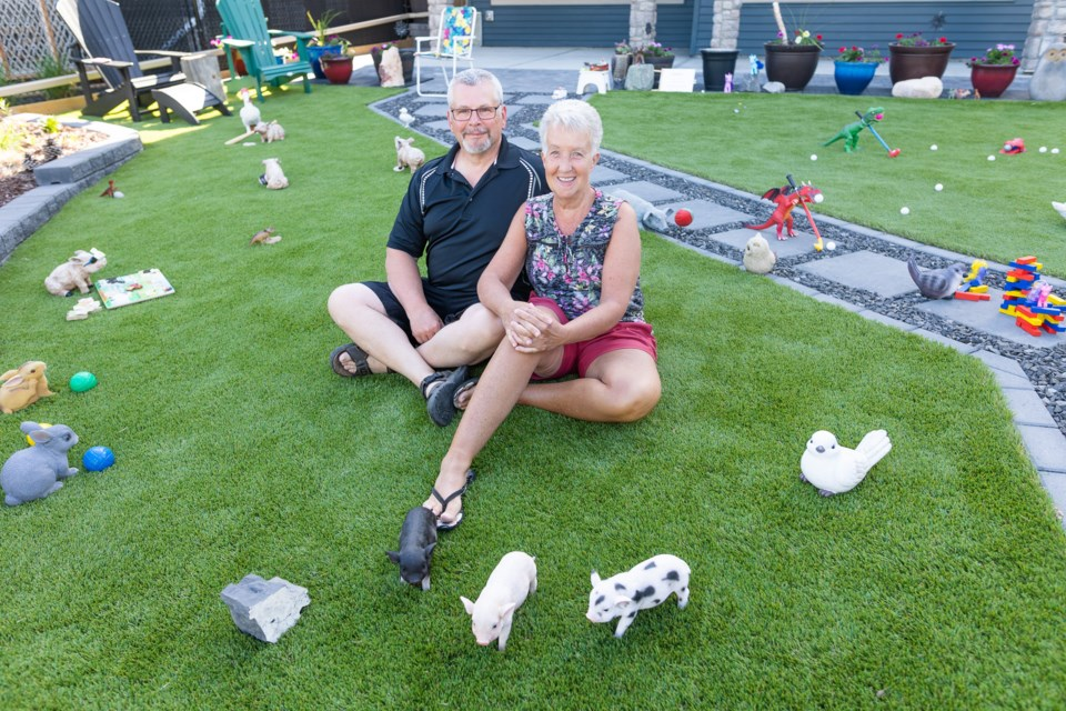 Stuart and Deb Beirnes among their ever-changing backyard display on June 4. The couple has been rearranging the various toys and statues in their backyard about once per week for over a year, with animals such as pigs, birds, and even a dragon being depicted in situations ranging from games of baseball to a COVID-19 vaccine lineup. The site has garnered the attention of many in the neighbourhood, including a daycare group that routinely stops by each week.
