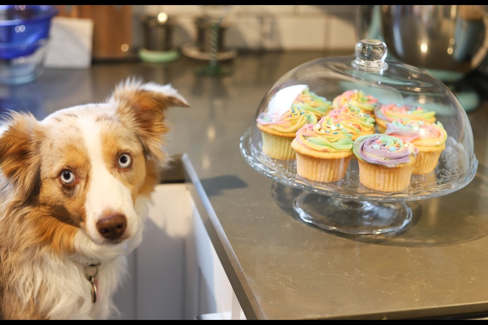 On National Cupcake Day, Feb. 22, the Ontario SPCA is encouraging you to enjoy cupcakes at home and make an online donation to support your local participating animal organization.