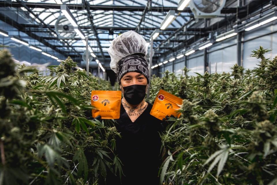 2020-01-05 Carmel Cannabis 1
