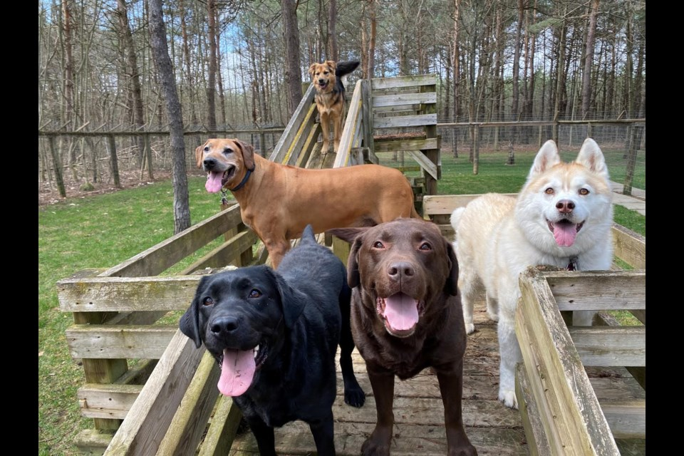 Pine Ridge Pet Centre Ltd. owner Paul Pobega says some dogs are showing some regression in their attitudes and social skills with other dogs due to the pandemic.