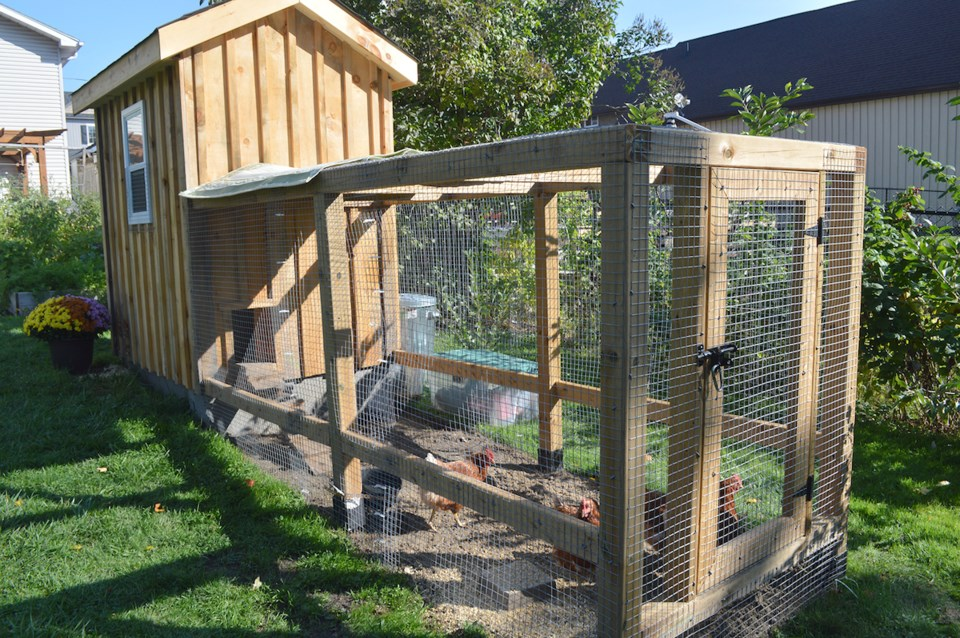 City wants your input on backyard chicken coops ...