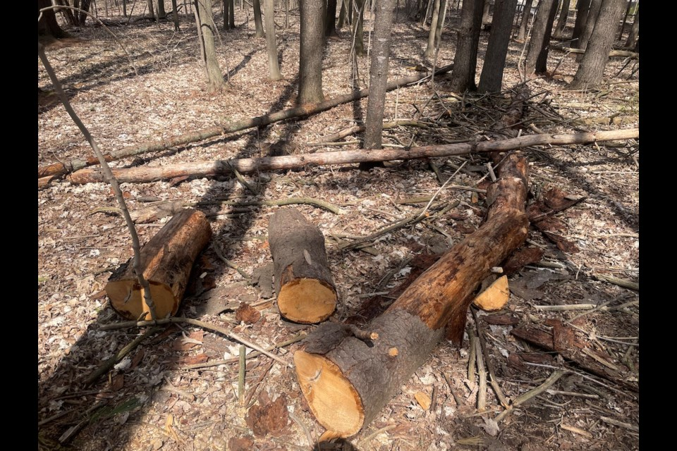 The Orillia Fire Department and Orillia OPP are investigating a series of arsons at Scout Valley.