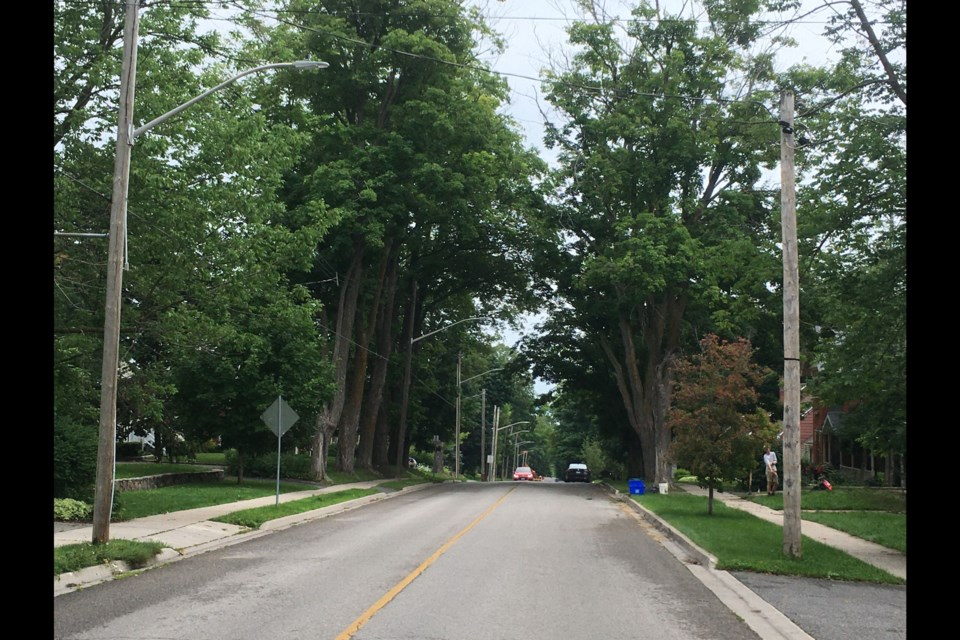 Orillia's tree canopy, when measured in 2015, was about 32 per cent. This photo shows the mature trees on Brant and Peter streets, looking east.