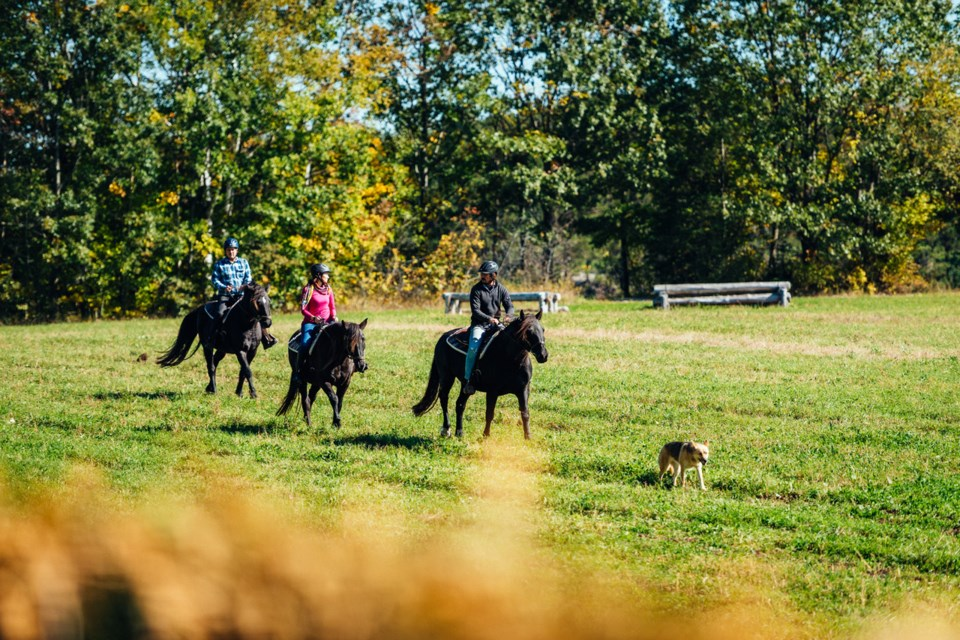 The unique trail riding experience at Glen Oro Farm allows guests to get to know their horse, practicing horse care and grooming prior to setting out on the beautiful trails.