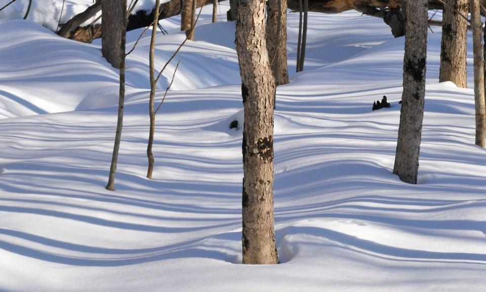 20100220_shadows on snow (Hawke)
