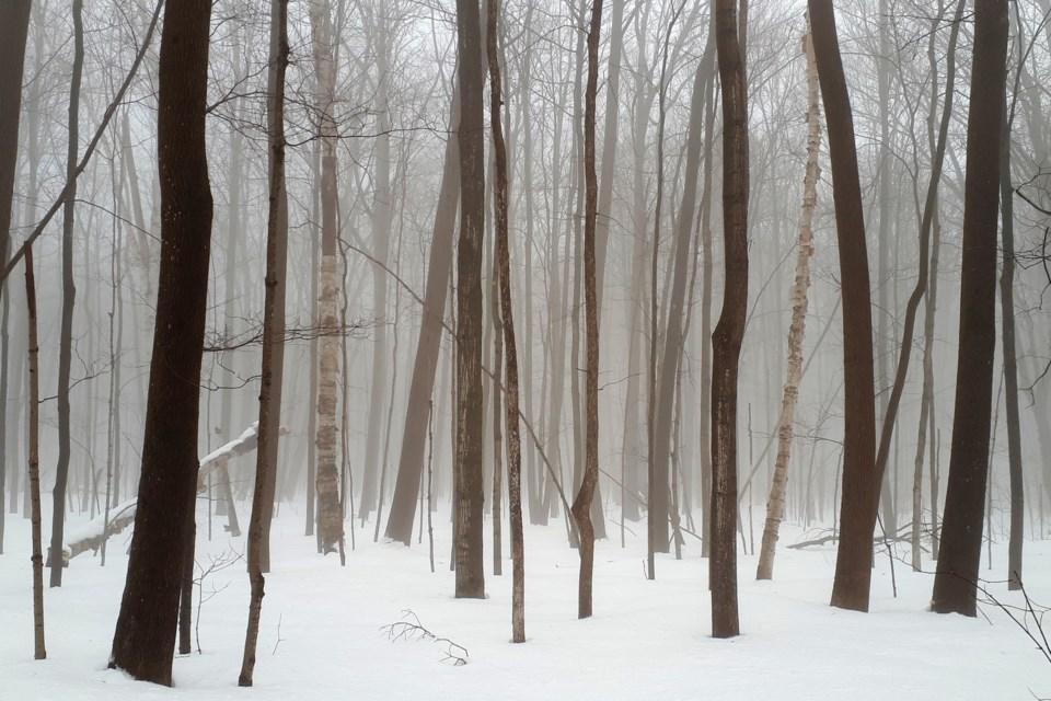 20190204_Tushingham fog (8) crop