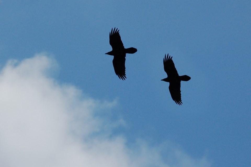 Oct 19 043 2 ravens cloud