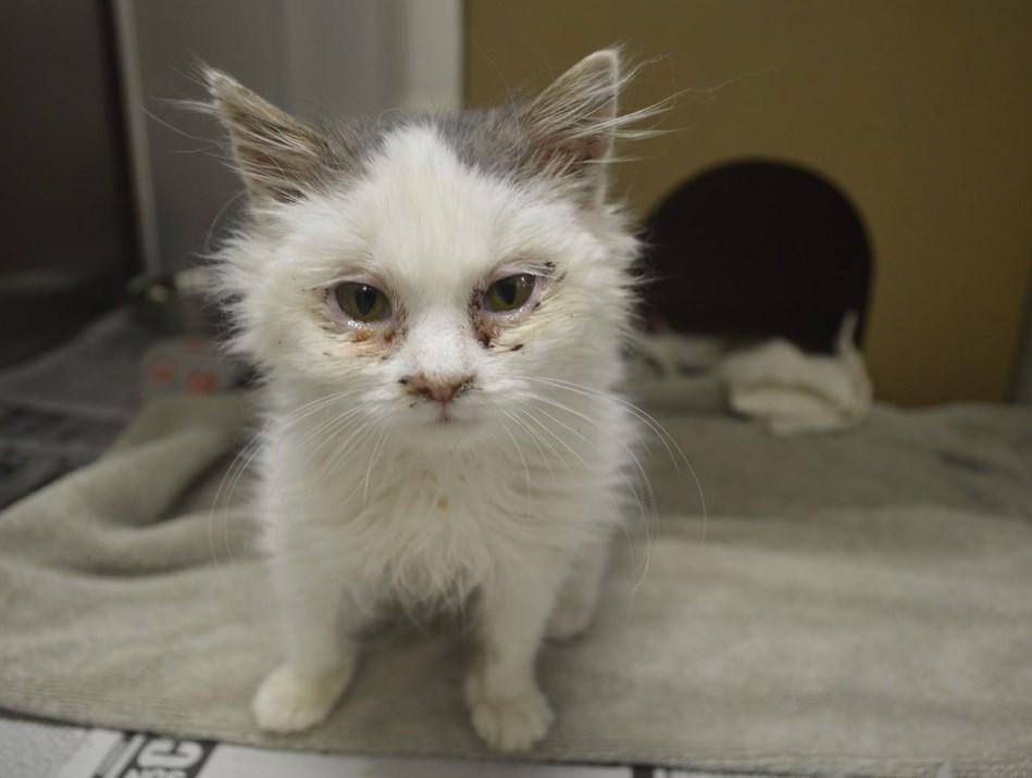 2019-12-03 sick kitty ottawa humane society