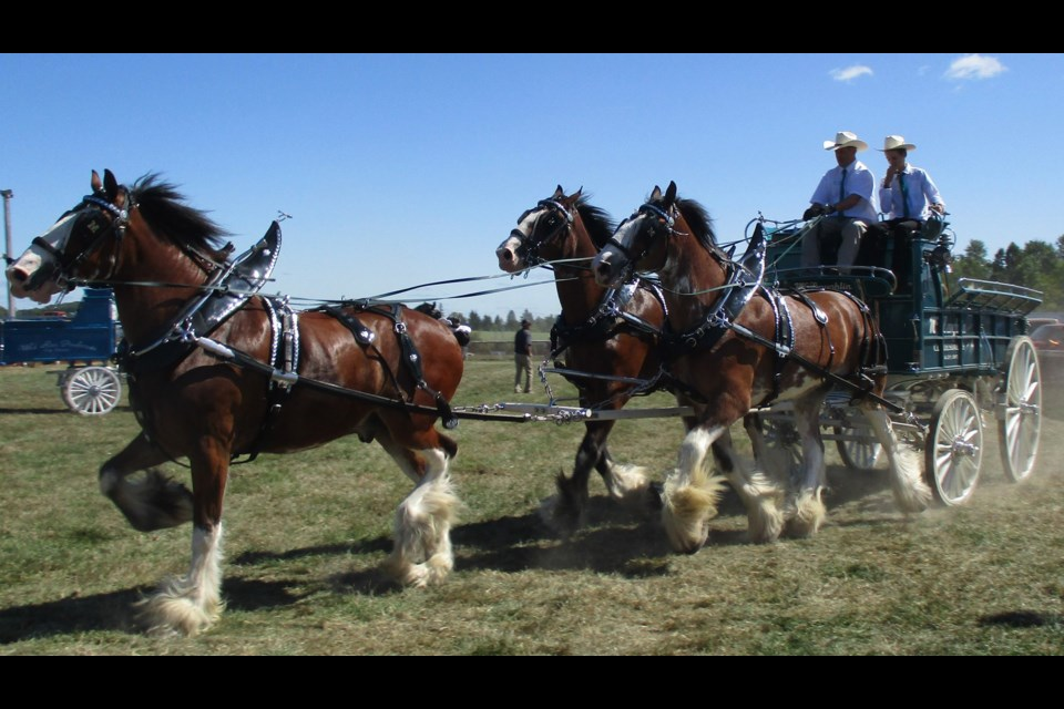 Champion horse teams from across North America travel to Renfrew to compete in first rate events with large cash prizes