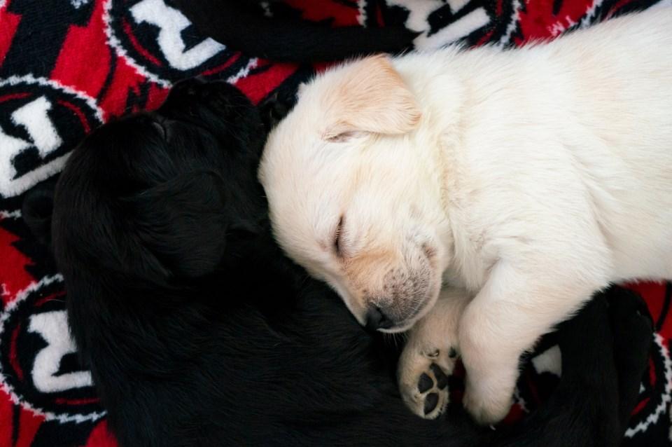 2019-04-08 redblacks puppies