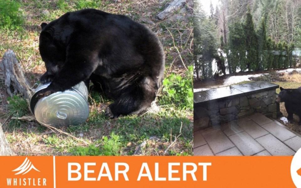 bear-alert-whitegold-1