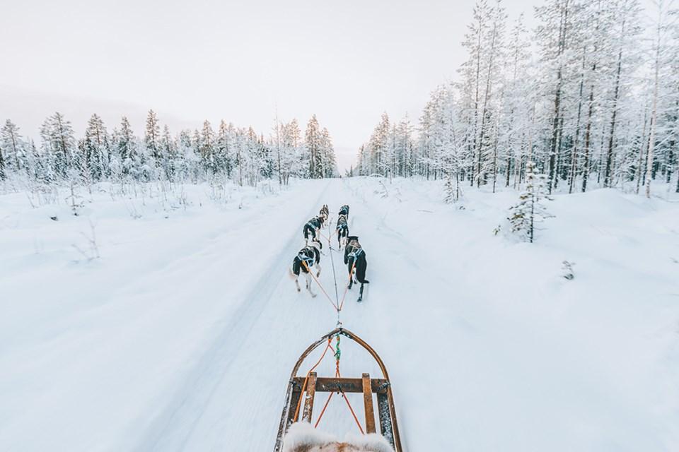 dog sledding in lapland, finland